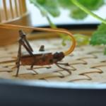 鈴虫の天敵について