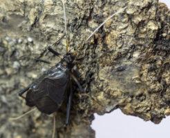 鈴虫 幼虫 育て方