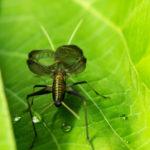 鈴虫の鳴き声と周波数について
