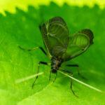 鈴虫の土の交換とその頻度について