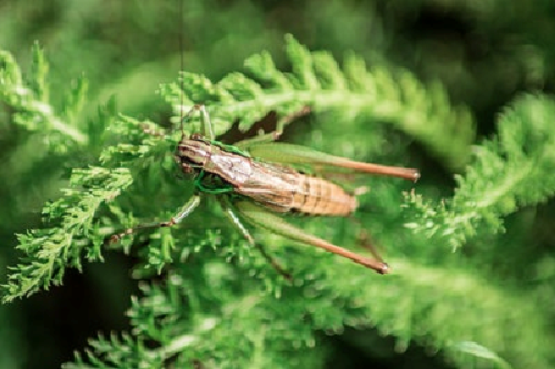 鈴虫 餌 飼育 頻度