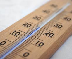 鈴虫 飼育 温度