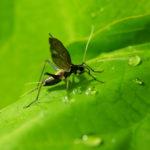 鈴虫の鳴き声の意味について