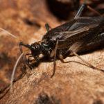 鈴虫の孵化の時期について