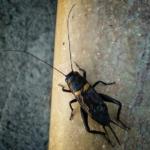 鈴虫の採集スポットや採集の方法について