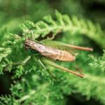 鈴虫の飼育の餌について。頻度はどれくらい!?