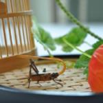 鈴虫の餌。野菜やゼリーの与え方は!?