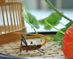 鈴虫 餌 野菜 ゼリー