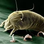 鈴虫の飼育でダニが発生!!原因や駆除方法について